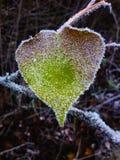 φύλλο του πάγου Στοκ φωτογραφία με δικαίωμα ελεύθερης χρήσης