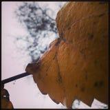 Φύλλο το φθινόπωρο Στοκ Εικόνες