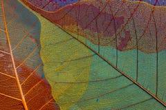 Φύλλο τρία σκιαγραφιών Στοκ Εικόνες
