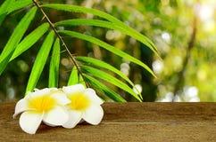 Φύλλο των άγριων ινδικών καλάμων που βρίσκονται στο λευκό τροπικών δασών whith και κίτρινων Στοκ Φωτογραφία