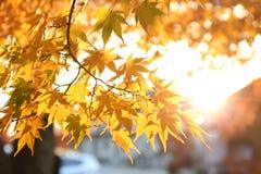 Φύλλο φθινοπώρου με το φως του ήλιου Στοκ Φωτογραφίες