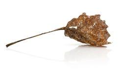 φύλλο φθινοπώρου παλαιό Στοκ Εικόνα