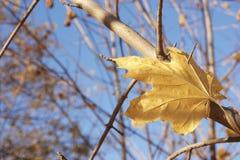 Φύλλο φθινοπώρου που πιάνεται στον κλάδο ενός δέντρου Στοκ Φωτογραφία