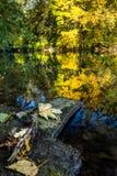 Φύλλο φθινοπώρου σε έναν βράχο σε έναν ποταμό με τα δέντρα φθινοπώρου Στοκ φωτογραφία με δικαίωμα ελεύθερης χρήσης