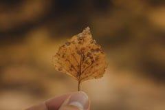 Φύλλο φθινοπώρου σε ένα θηλυκό χέρι Στοκ Εικόνα