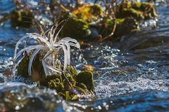 Φύλλο φθινοπώρου σε ένα σκοτεινό υπόβαθρο Στοκ Εικόνα