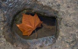 Φύλλο φθινοπώρου στη λακκούβα Στοκ Φωτογραφίες
