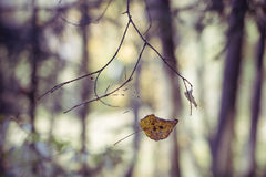 Φύλλο φθινοπώρου στον κλάδο Στοκ εικόνα με δικαίωμα ελεύθερης χρήσης