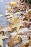 Φύλλο φθινοπώρου στο τσιμεντένιο πάτωμα Στοκ Εικόνα
