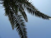 Φύλλο φοινικών ενάντια στο μπλε ουρανό Στοκ εικόνα με δικαίωμα ελεύθερης χρήσης