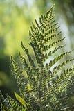 Φύλλο φτερών στο πράσινο δασικό περιβάλλον τοπίου στοκ φωτογραφίες