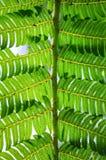 Φύλλο φτερών Στοκ Εικόνα