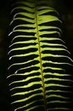 Φύλλο φτερών Στοκ φωτογραφία με δικαίωμα ελεύθερης χρήσης
