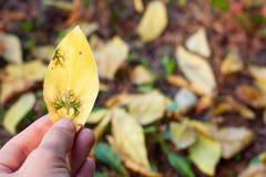 φύλλο χεριών στοιχείων σχεδίου κίτρινο Στοκ Εικόνα