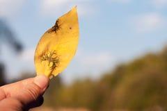 φύλλο χεριών στοιχείων σχεδίου κίτρινο Στοκ φωτογραφία με δικαίωμα ελεύθερης χρήσης