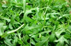 Φύλλο arugula πρασίνων στο πλήρες υπόβαθρο Στοκ Εικόνες