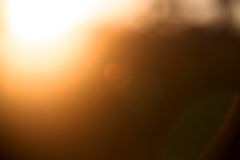 Φύλλο Bokeh με το φως του ήλιου Στοκ Εικόνα