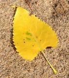 Φύλλο Cottonwood Στοκ φωτογραφίες με δικαίωμα ελεύθερης χρήσης