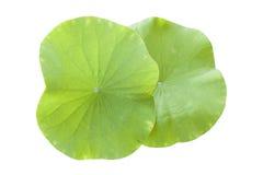 Φύλλο Lotus που απομονώνεται στο λευκό Στοκ εικόνες με δικαίωμα ελεύθερης χρήσης