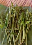 Φύλλο Philodendron Στοκ Εικόνες