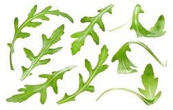 Φύλλο Ruccola που απομονώνεται στο άσπρο υπόβαθρο, ενιαία πράσινη συλλογή φύλλων arugula Στοκ φωτογραφία με δικαίωμα ελεύθερης χρήσης