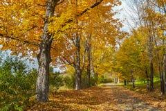 Φύλλωμα πτώσης, φθινόπωρο Στοκ Φωτογραφίες