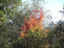 Φύλλωμα στην πυρκαγιά Στοκ εικόνες με δικαίωμα ελεύθερης χρήσης