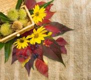 Φύλλωμα φθινοπώρου και εδώδιμα κάστανα. Στοκ φωτογραφία με δικαίωμα ελεύθερης χρήσης