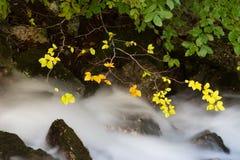Φύλλωμα φθινοπώρου και ρέοντας ρεύμα Στοκ εικόνες με δικαίωμα ελεύθερης χρήσης