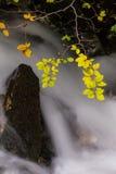 Φύλλωμα φθινοπώρου και ρέοντας ρεύμα Στοκ Φωτογραφίες