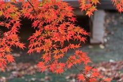 Φύλλωμα φθινοπώρου στον κήπο Sankeien, Yokohama, Kanagawa, Ιαπωνία στοκ εικόνες με δικαίωμα ελεύθερης χρήσης