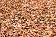 Φύλλωμα φθινοπώρου Φύλλα φθινοπώρου Στοκ φωτογραφίες με δικαίωμα ελεύθερης χρήσης