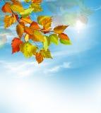 Φύλλωμα φθινοπώρου Χρυσό φθινόπωρο Στοκ Εικόνες