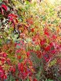 Φύλλωμα φθινοπώρου Στοκ εικόνα με δικαίωμα ελεύθερης χρήσης