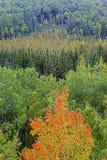 Φύλλωμα φθινοπώρου Algonquin, Καναδάς Στοκ φωτογραφία με δικαίωμα ελεύθερης χρήσης