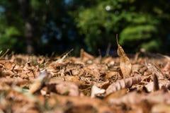 Φύλλων μακρο έδαφος εποχής φθινοπώρου λεπτομέρειας πεσμένο πορτοκάλι νεκρό Στοκ εικόνα με δικαίωμα ελεύθερης χρήσης