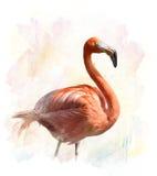 Φλαμίγκο - απεικόνιση Watercolor απεικόνιση αποθεμάτων