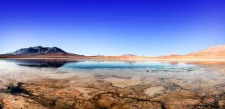 Φλαμίγκο Βολιβία λιμνοθαλασσών στοκ φωτογραφία με δικαίωμα ελεύθερης χρήσης