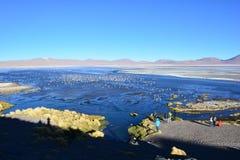 Φλαμίγκο και άλλα πουλιά σε μια λίμνη στη Βολιβία Στοκ φωτογραφία με δικαίωμα ελεύθερης χρήσης