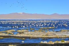 Φλαμίγκο και άλλα πουλιά σε μια λίμνη στη Βολιβία Στοκ Εικόνες