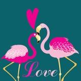 Φλαμίγκο πουλιών αγάπης Στοκ εικόνα με δικαίωμα ελεύθερης χρήσης