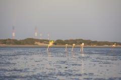 Φλαμίγκο που τρώει στην παραλία και τις εγκαταστάσεις παραγωγής ενέργειας στο υπόβαθρο Στοκ φωτογραφία με δικαίωμα ελεύθερης χρήσης
