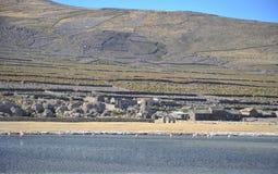 Φλαμίγκο στην αλατισμένη λίμνη Uyuni Στοκ φωτογραφία με δικαίωμα ελεύθερης χρήσης