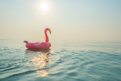 Φλαμίγκο στη θάλασσα Στοκ φωτογραφία με δικαίωμα ελεύθερης χρήσης