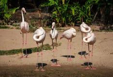 Φλαμίγκο στο ζωολογικό κήπο στοκ εικόνες