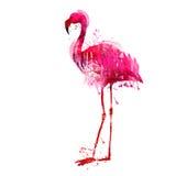 Φλαμίγκο Watercolor ελεύθερη απεικόνιση δικαιώματος