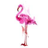 Φλαμίγκο Watercolor Στοκ Εικόνα