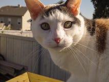 Φλεγμονώδης η γάτα Στοκ εικόνες με δικαίωμα ελεύθερης χρήσης