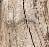 Φλοιός δέντρων ή ξύλινη σύσταση Στοκ Εικόνες