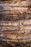 Φλοιός δέντρων καρύδων Στοκ φωτογραφία με δικαίωμα ελεύθερης χρήσης